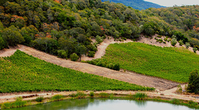The History of the Cassata Sonoma Vineyard